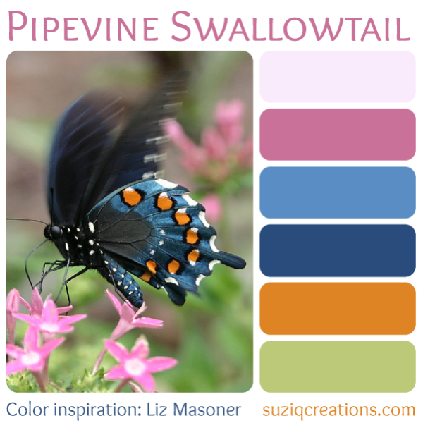 Pipevine Swallowtail - Color Inspiration from Nature